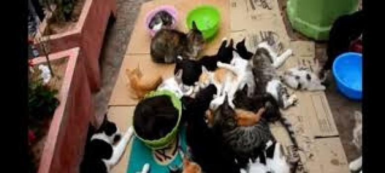 Non à l'extermination des chats du marché d'Agadir